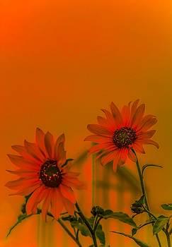 Sunny Side Up by Abbie Loyd Kern
