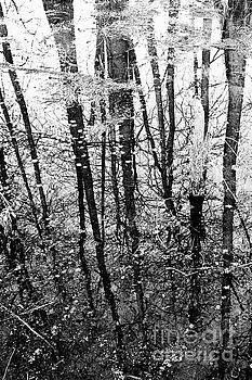 Scott Pellegrin - Swamp Reflections