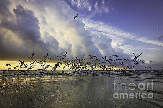 Take Flight by Joan McCool