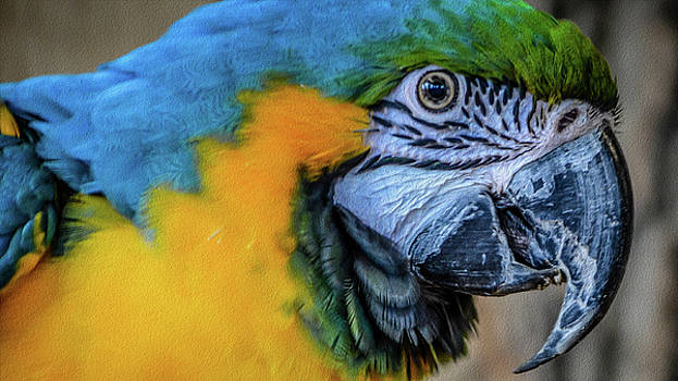The Blue-and-Yellow Macaw by Kathryn Potempski