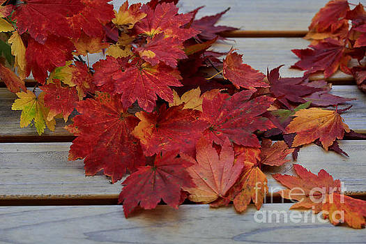 The Essence Of Fall by Tracy  Hall