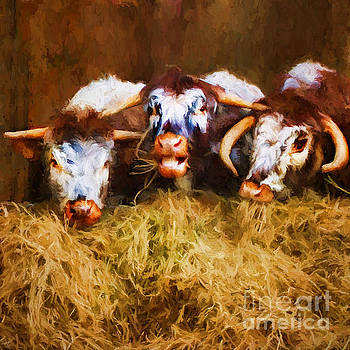 The Laughing Cow. by ShabbyChic fine art Photography