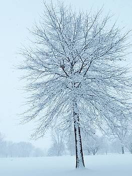 The Winter Tree  by Lori Frisch