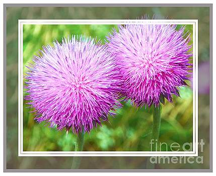 Thistles in Love by Shirley Moravec