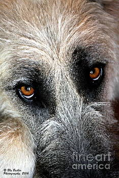 Those Eye's by Ann Butler
