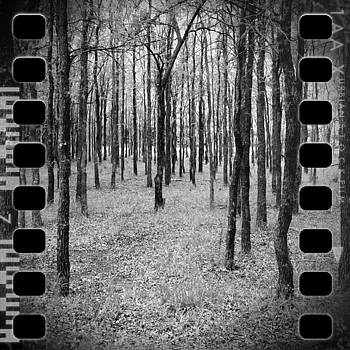 Through the Woods on a Winter's Day by Greg Kopriva
