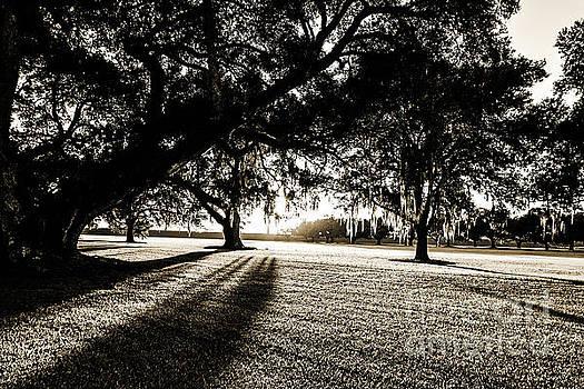 Scott Pellegrin - Tranquility Amongst the Oaks