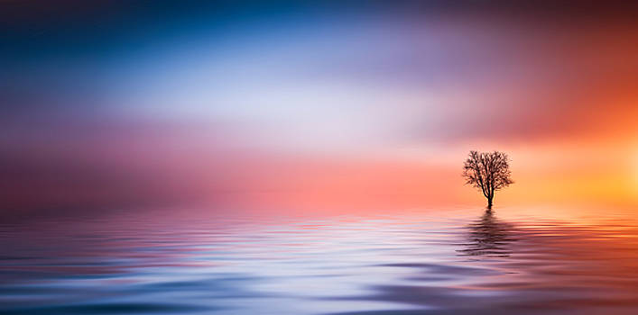 Tree by Bess Hamiti