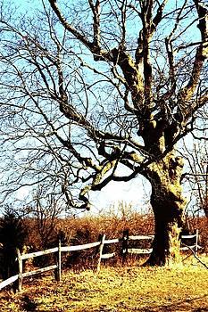 Tree by Dana Flaherty