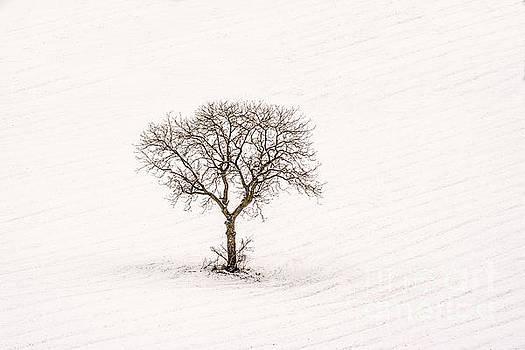 BERNARD JAUBERT - Tree isolated in winter. Auvergne. france