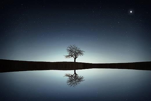 Tree near lake at night by Bess Hamiti
