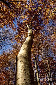 BERNARD JAUBERT - Tree trunk