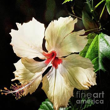 Tropical Hibiscus by Karen Lewis