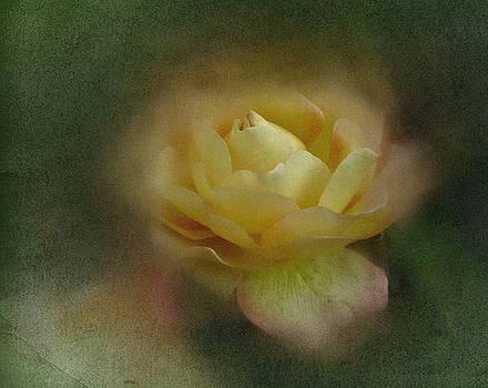 Vintage October Rose  by Richard Cummings
