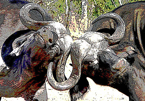 Water Buffalo by Charles Shoup