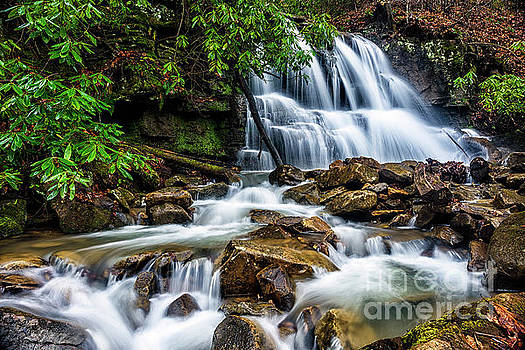 Waterfall and Rhododendron by Thomas R Fletcher