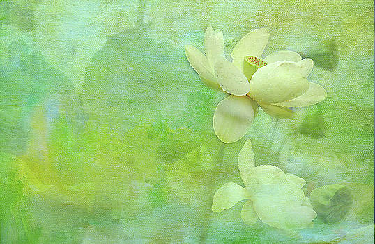 Waterlily by Carolyn Dalessandro