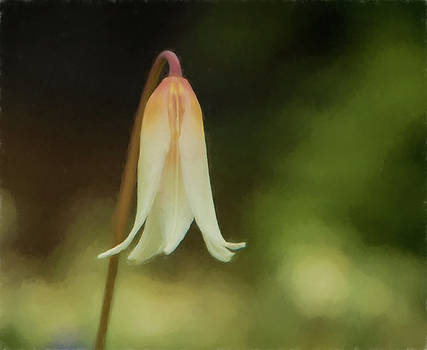 Marilyn Wilson - Easter Lily - watercolor effect