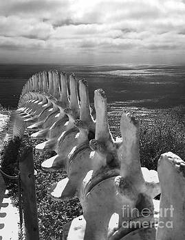 Gregory Dyer - Whale Bones in Black and White