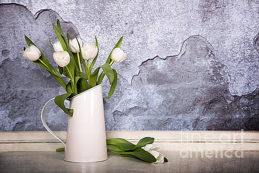White tulips by Jane Rix