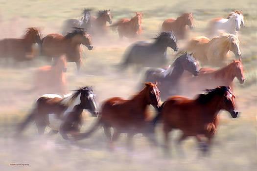 Wild Horses by Ron Jones
