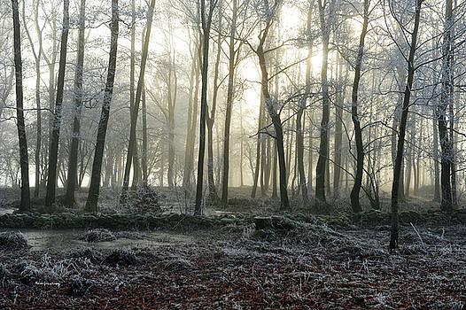 Winter Fog by Randi Grace Nilsberg