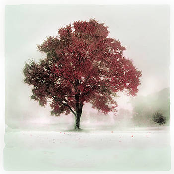 winter greets Autumn by Gina Signore