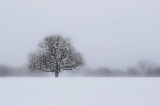 Winter in Waveny by Chris Burke