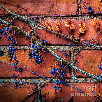 Winter Vine by Michael Arend