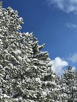 Winter Wonderland by Michael Krek