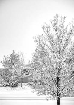 Winter Wonderland by Nancy Marie Ricketts