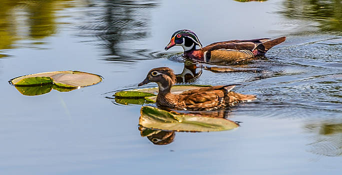 Wood Duck Pair by Jerry Cahill
