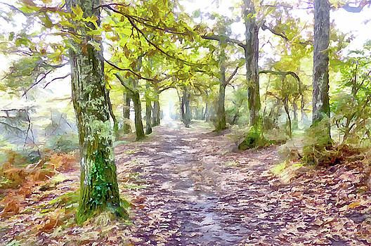 Woodland Walk by Bishopston Fine Art