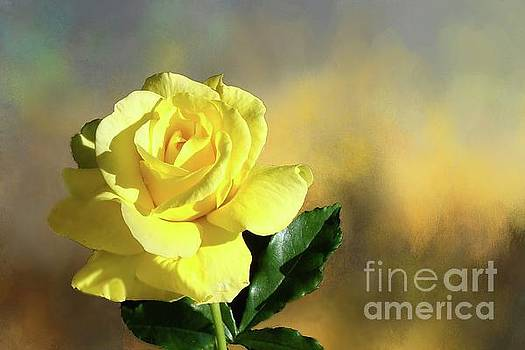 Yellow Rose of Texas by Janette Boyd