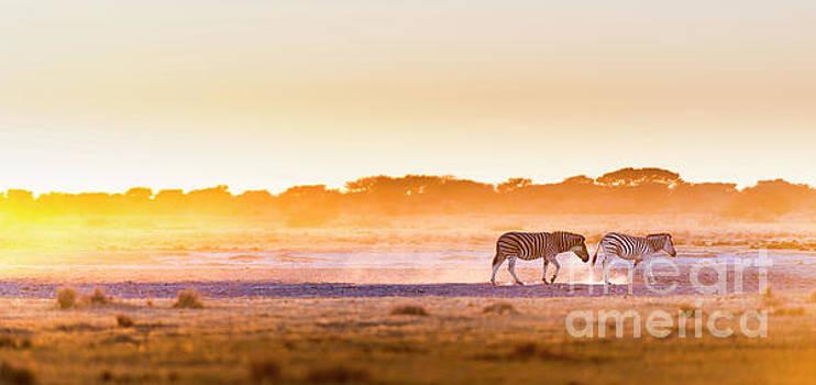 Tim Hester - Zebra Sunset Botswana