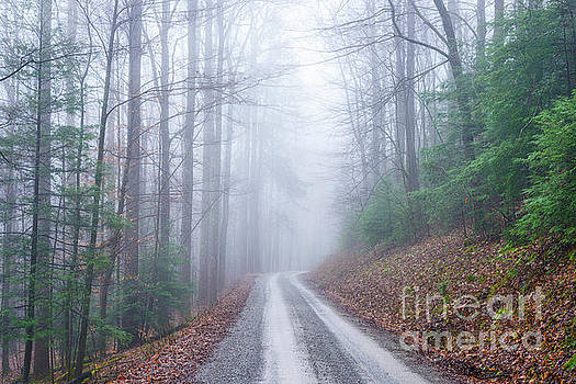 Winter Monongahela National Forest by Thomas R Fletcher