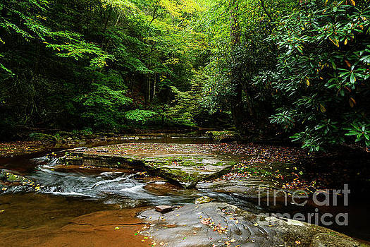 Williams River Headwaters by Thomas R Fletcher