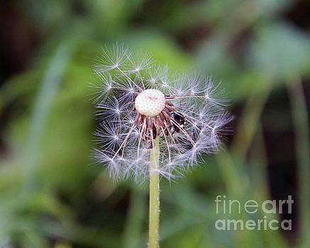 Weed Seeds by Elvira Ladocki