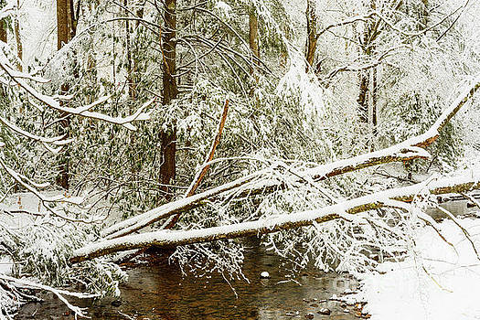 Winter along Cranberry River by Thomas R Fletcher