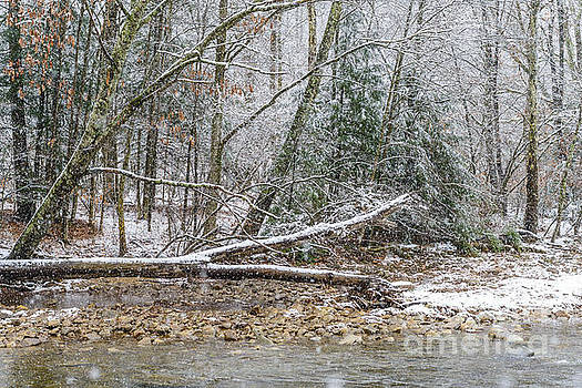 Autumn Snow Williams River  by Thomas R Fletcher