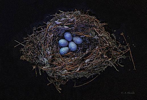 #2 Birds Nest by Carolyn Marchetti