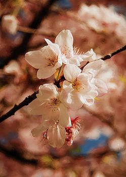 Marilyn Wilson - Romantic Sakura Blossoms