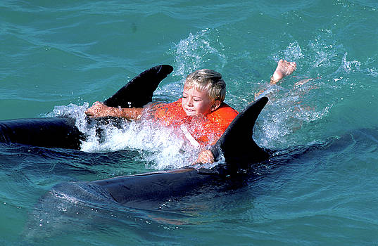 Boy Towed by Dolphins by Carl Purcell