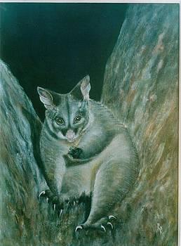 Brush Tailed Possum by Rita Palm