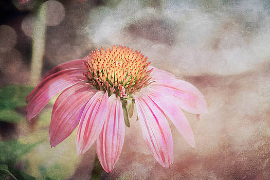 Coneflower by Jerri Moon Cantone
