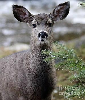 Deer by Irina Hays