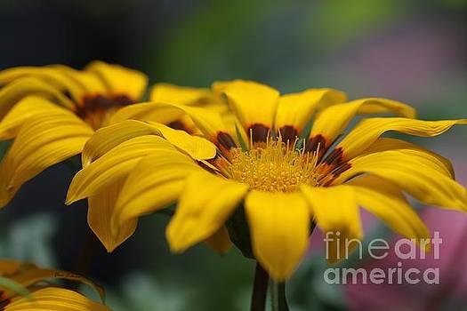 Double Yellow by Yumi Johnson