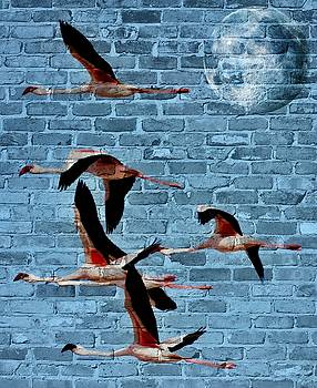 Flamingos in the sky... by Werner Lehmann