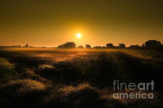 Foggy Morning by Franziskus Pfleghart