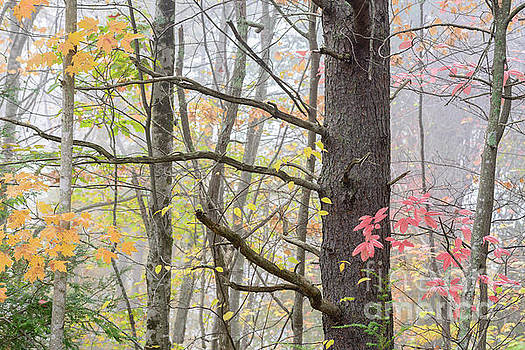 Gauley River National Recreation Area by Thomas R Fletcher